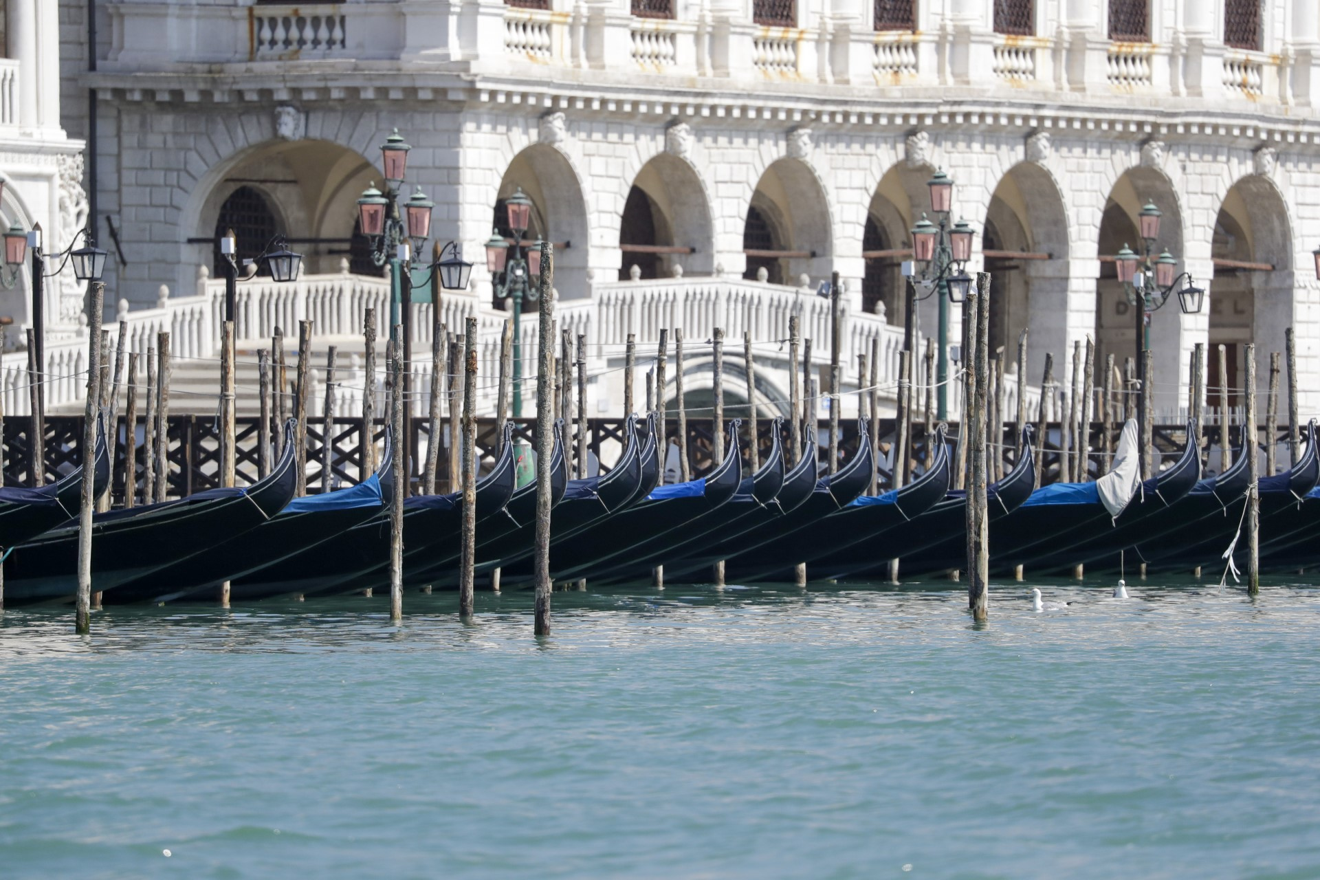 Morning in Venice: Chronicle of a city weathering the quarantine