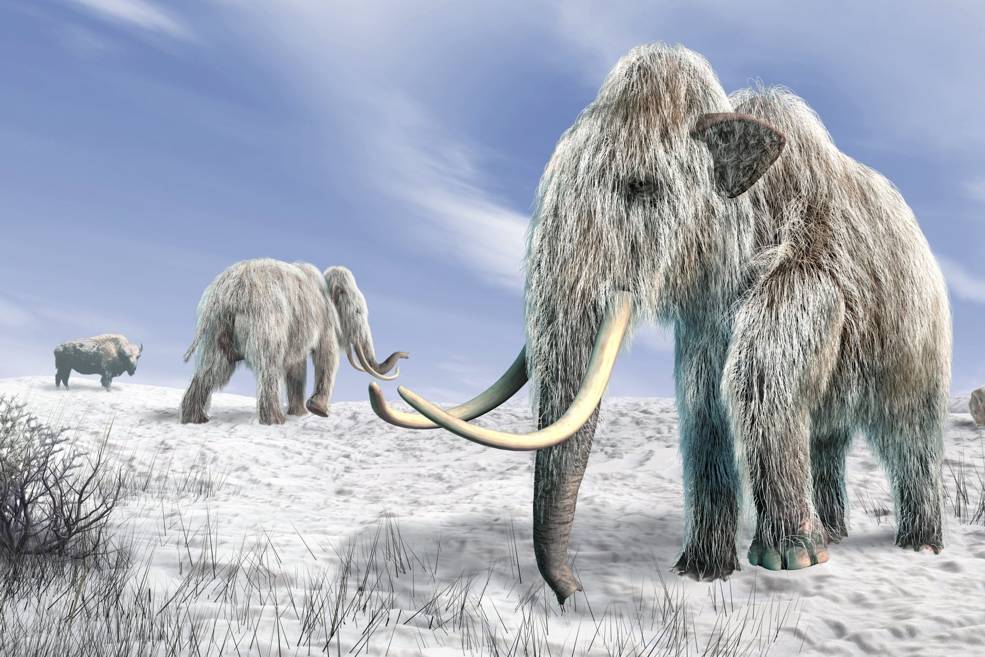 Bringing back the mammoth: an exciting scientific project